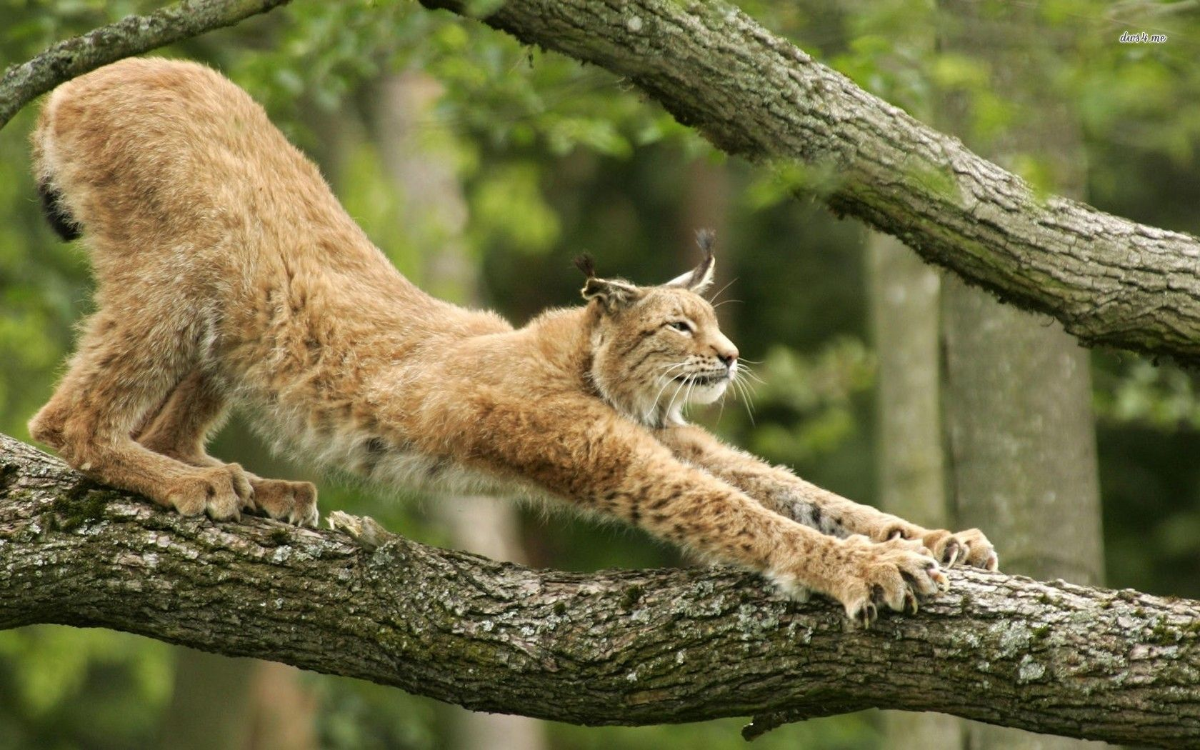 stretching animals Google Search (With images