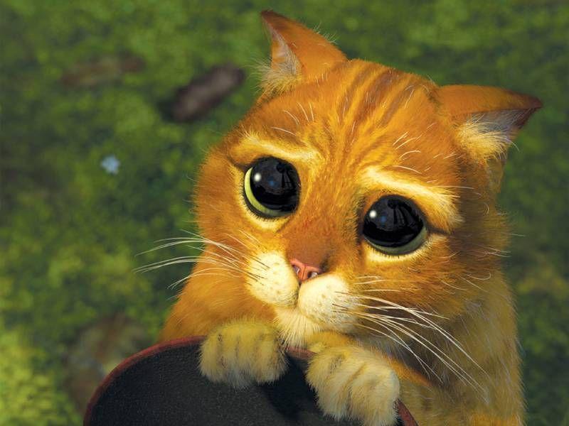 15 Cats Acting Out Their Favorite Movies Gatito Shrek Meme Gato