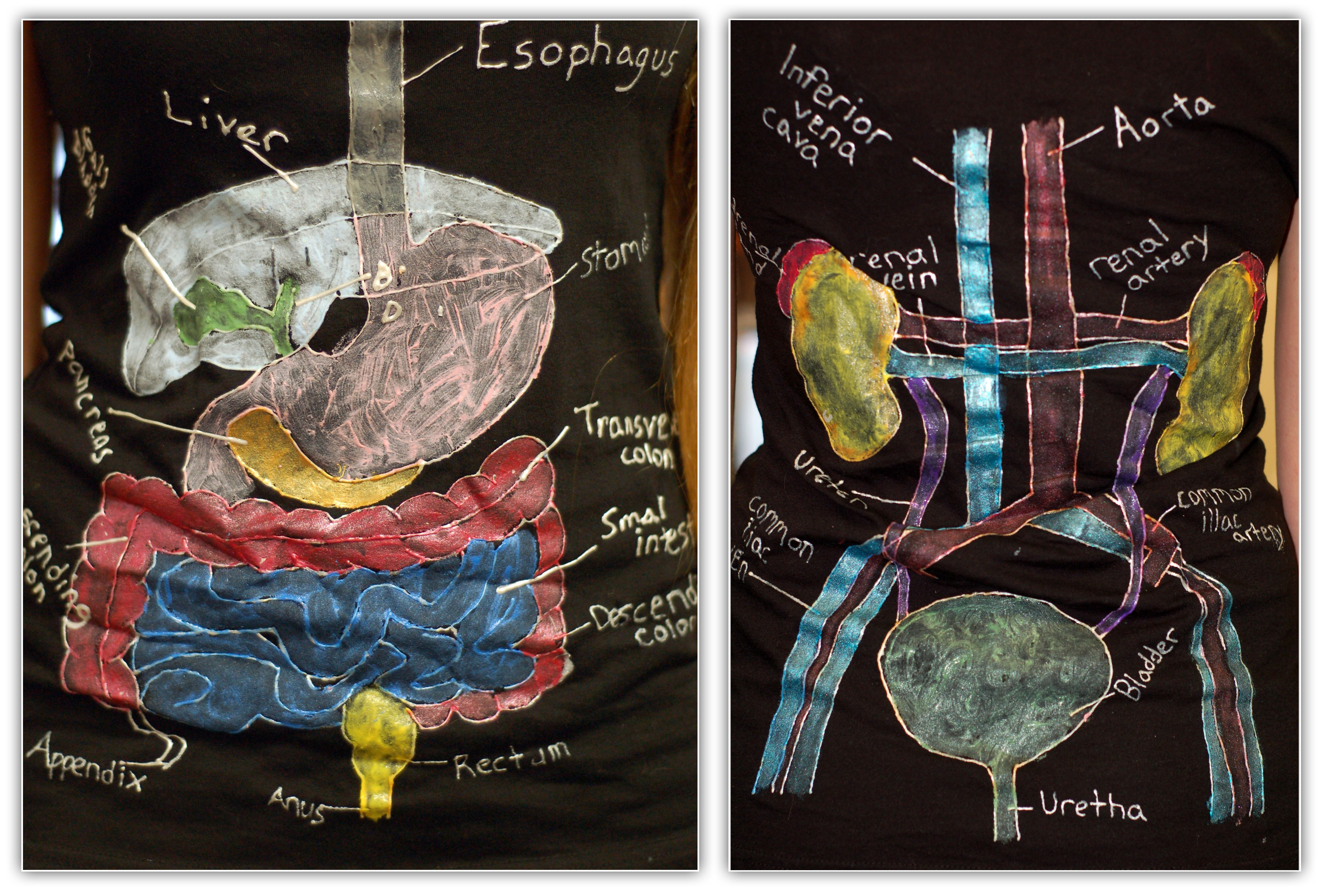 Anatomy & Physiology students at the Upper School painted ...