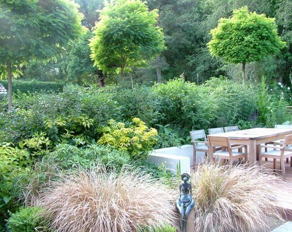 north facing garden using Mop Head Acacias   Garden   Pinterest ...
