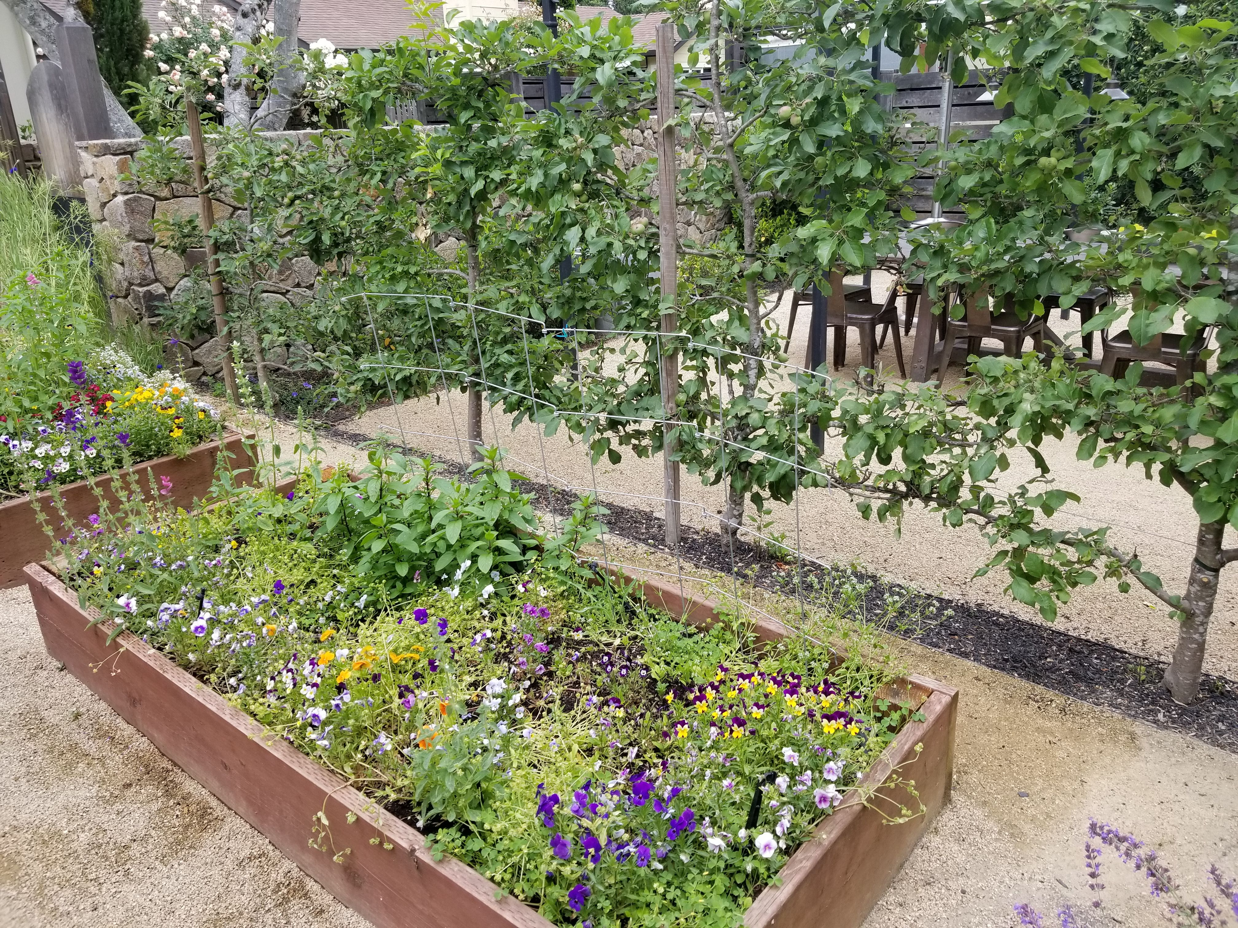 Farmhouse  Plants