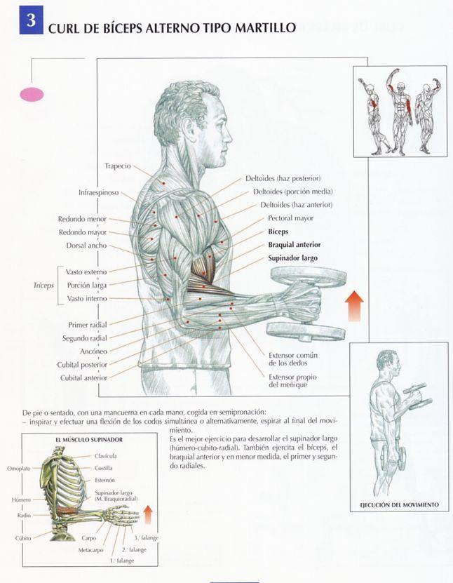 Tipos de ejercicios con mancuernas para biceps