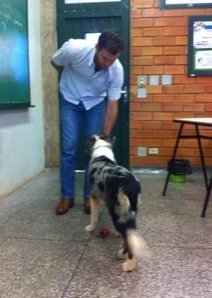 Projeto em universidade leva cães para dentro da sala de aula