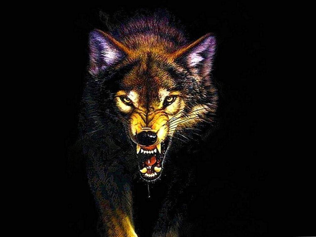41++ Wolf mad information
