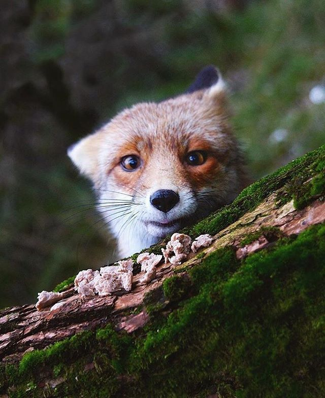 Hi there, furry friend! We're so amazed at how @kpunkka connects with nature by capturing stunning animal portraits. #skillshare