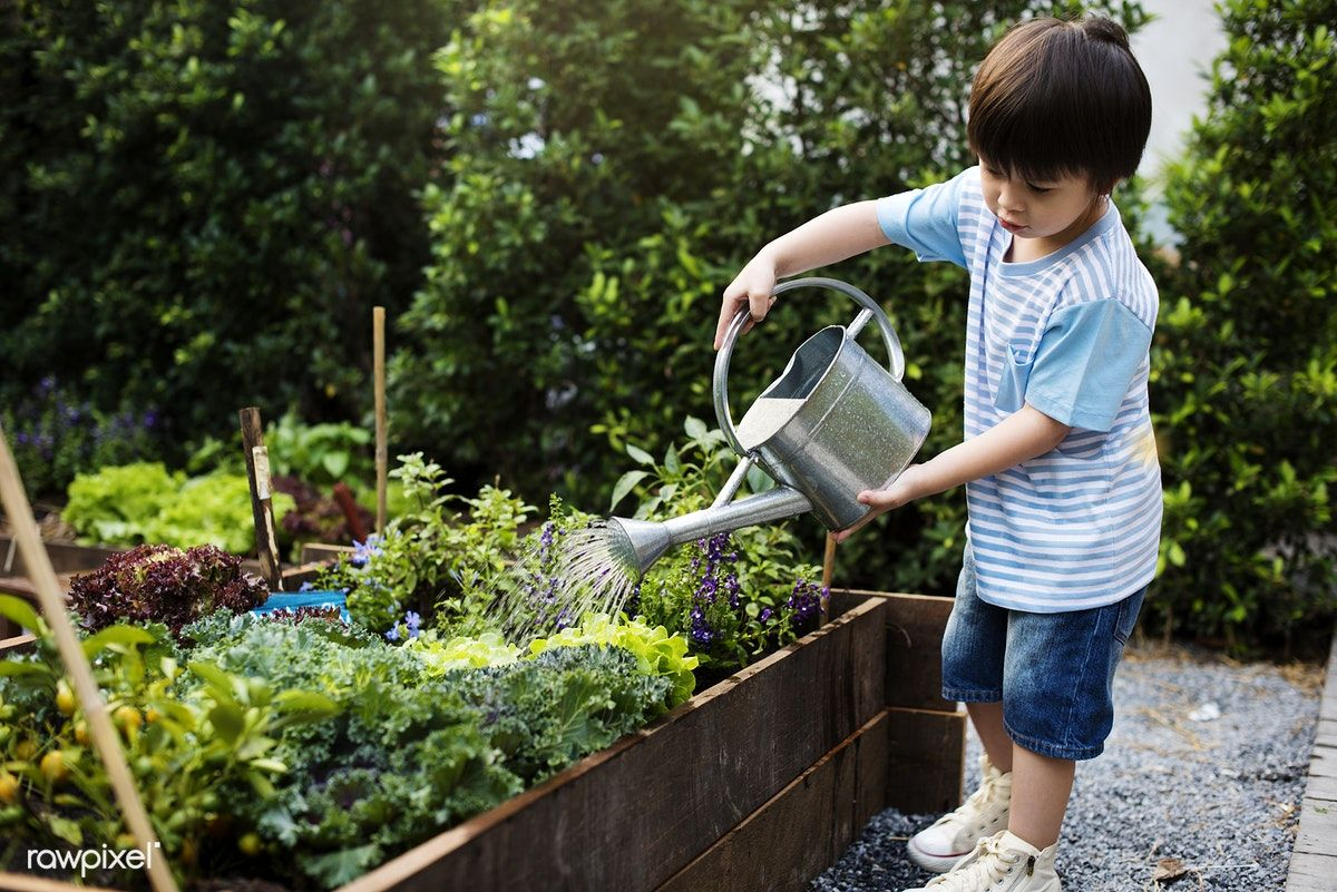 Little Boy Watering The Plants Premium Image By Rawpixel