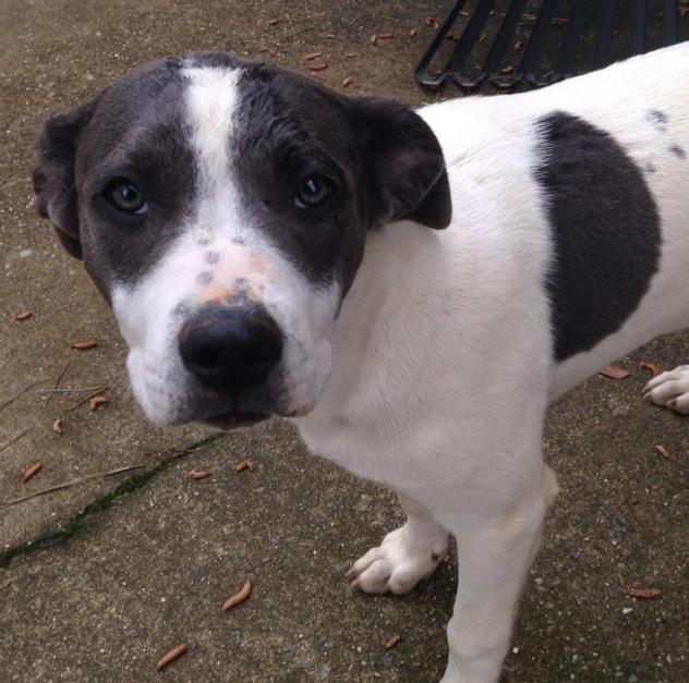 Adopt Bella Pending On Dog Adoption Animals Pet Adoption
