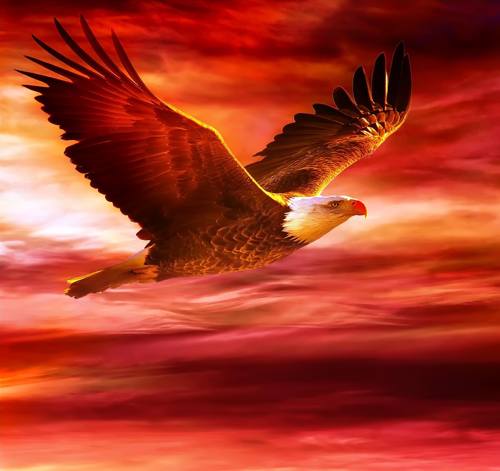 Юбилеем подруге, орел в небе открытка