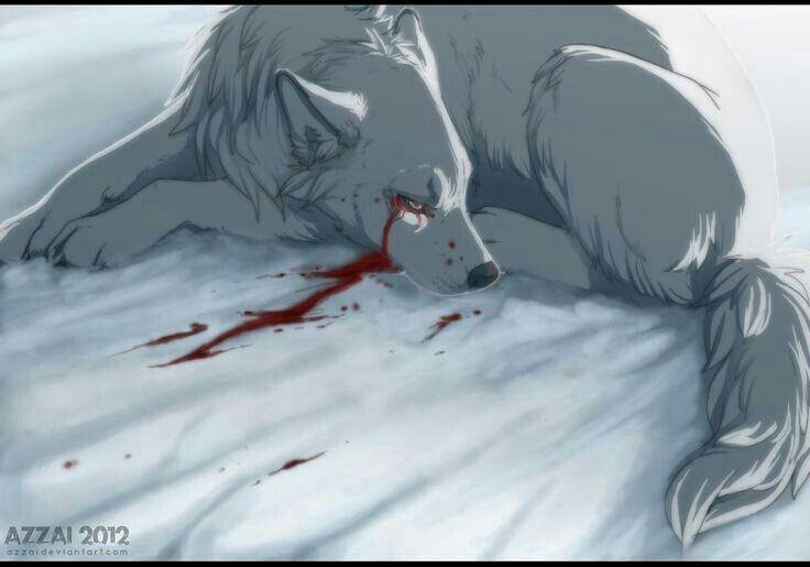 волк раненый картинки