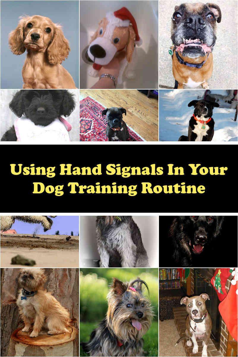 Sure Dog Coaching Techniques Dogs Dog Training Coaching Techniques