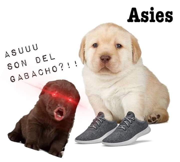 Pin De Altokeprro En Random Memes Perros Perros Tristes Memes