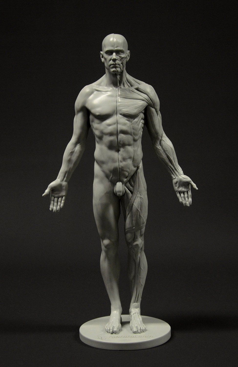 Amazon | Male Anatomy Figure: 11-inch Anatomical Reference for Artists (Grey) 男性解剖図 | 文房具・オフィス用品