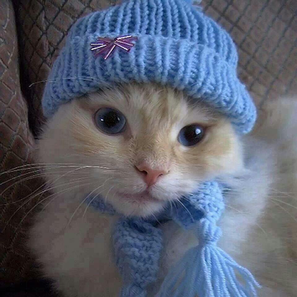 Bundled Kitty
