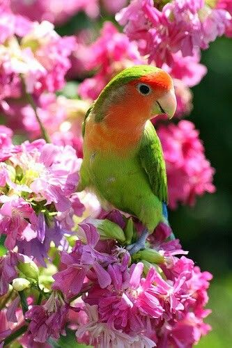 Piolin Y Las Flores Beautiful Birds Pretty Birds Pet Birds