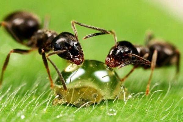 garten haus Ameisen bekämpfen hausmittel wohnung Haushaltstricks - was hilft gegen ameisen in der küche