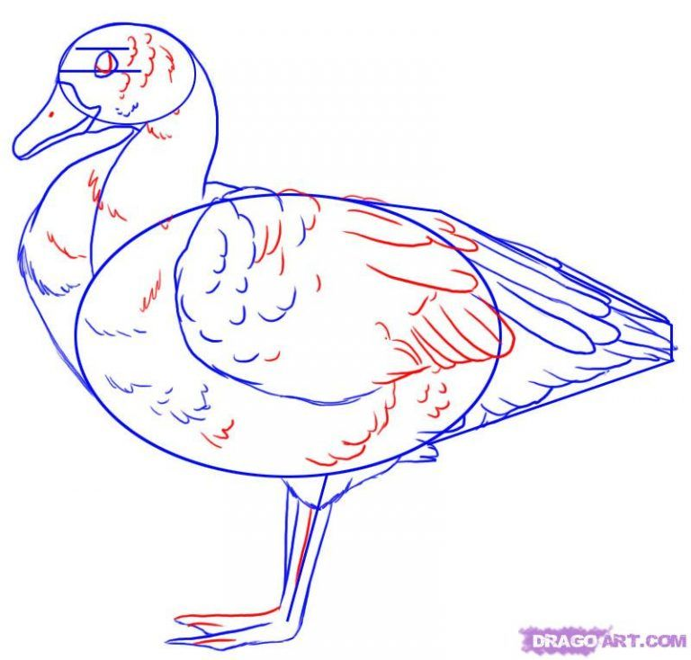 goose drawing How to Draw a Goose Step by Step Birds