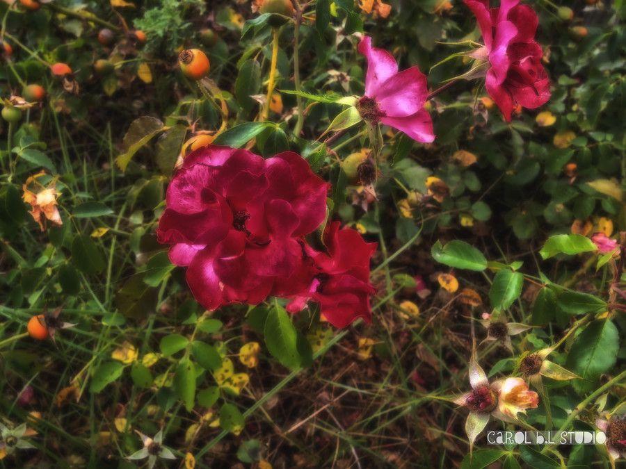 Flores de ensueño by Carol B. Lerma on 500px
