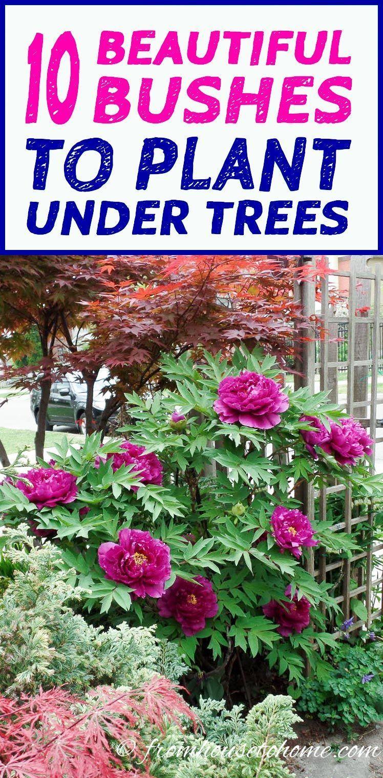 Shade Loving Shrubs 11 Beautiful Bushes To Plant Under 400 x 300