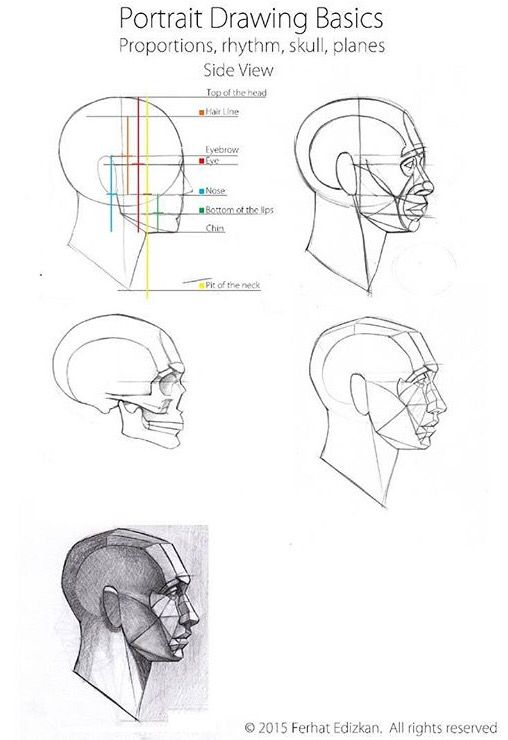 Pin By Mina On Human Pinterest Anatomy Draw And Face