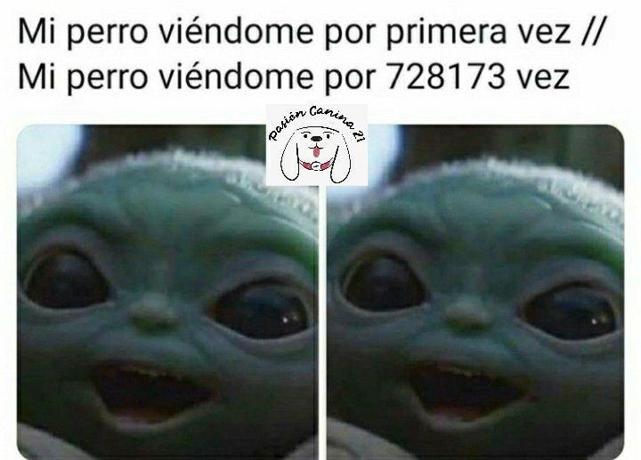 Siguenos En Facebook E Instagram Como Pasioncanina21 En 2020 Memes Divertidos Memes Buenisimos Memes Perrones