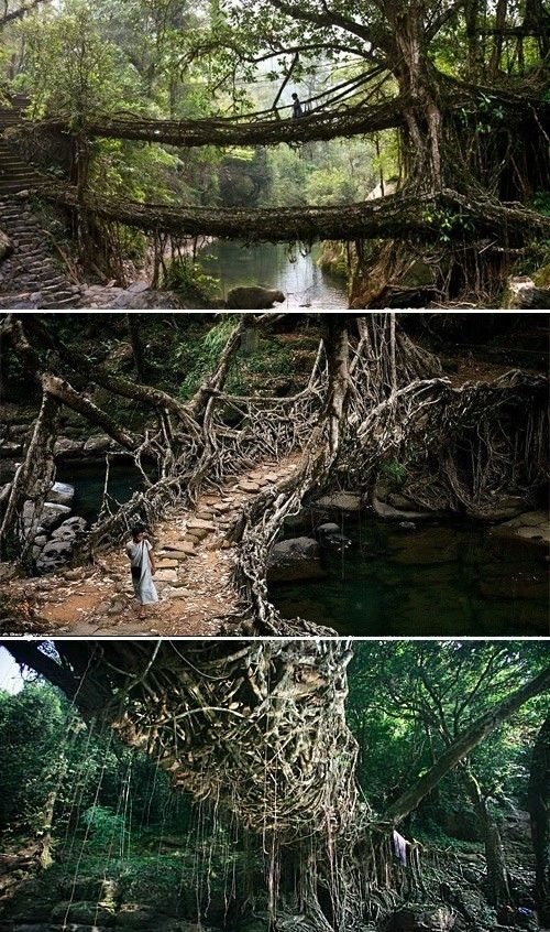 The Root Bridges of Cherrapunji refer to bridges that are woven from the roots of living rubber trees in the Cherrapunji rainforests of Meghalaya, India. Some of them are more than a hundred feet long, grow over decades and withstand the weight of fifty people http://failblog.cheezburger.com/