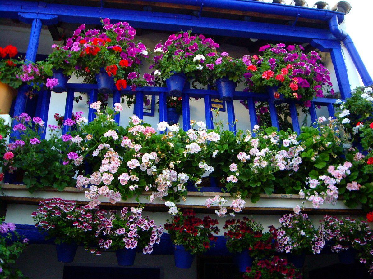 Patios 2012 - 19 - Blue balcony