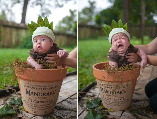 Mandrake baby costume photo shoot Harry Potter  cc4b8dd6013