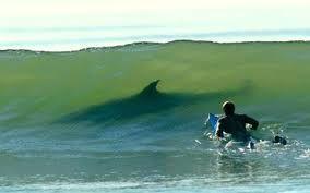 surfistas atacados por tiburones - Buscar con Google