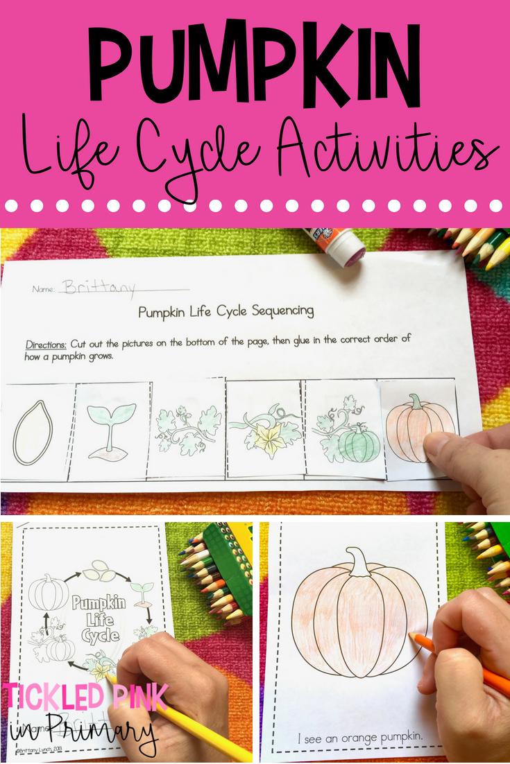 Learning About Pumpkins Tickled Pink In Primary Pumpkin Activities Kindergarten Kindergarten Science Activities Pumpkin Life Cycle [ 1102 x 735 Pixel ]