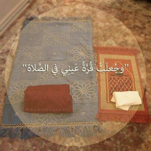 ماذا يقرأ في صلاة الوتر سبح اسم ربك الأعلى و قل يا أيها الكافرون و قل هو الله أحد Islamic Prayer Prayers Little Prayer