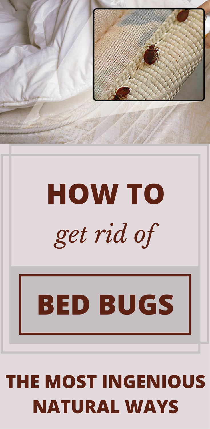 How To Get Rid Of Bed Bugs The Most Ingenious Natural