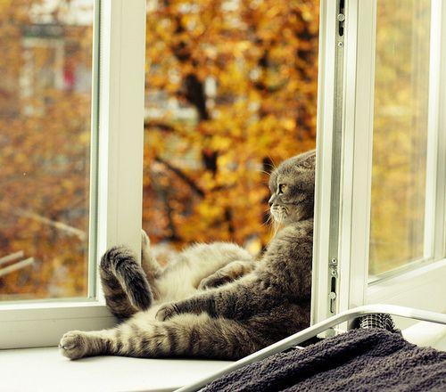 enchanting-autumn:  Ph.D. Cat by Samer06 on Flickr.