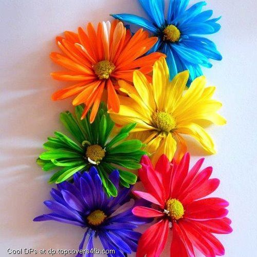 Multiple Coloured Flowers Cool Display Pictures Happy Colors Rainbow Colors Rainbow