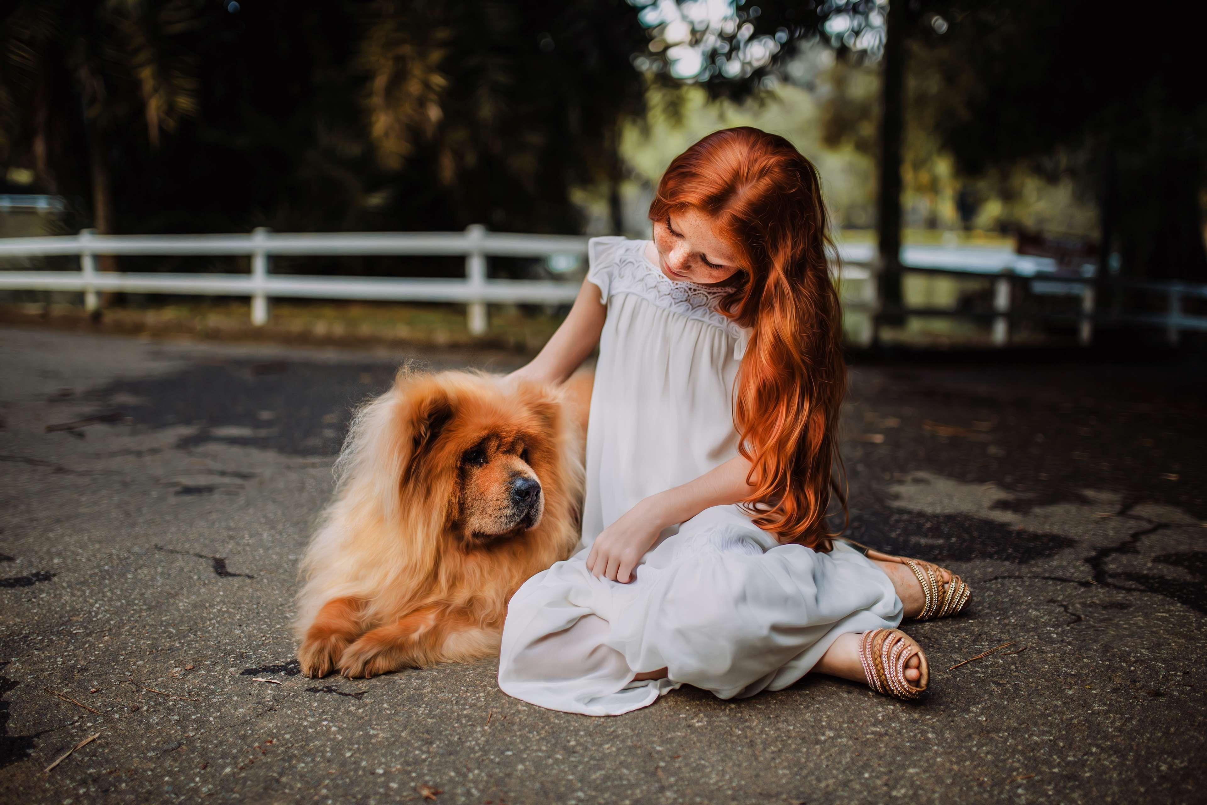 Great Spitz Canine Adorable Dog - 62ccfa93c38fba22083be2a0f6fd6997  2018_109638  .jpg
