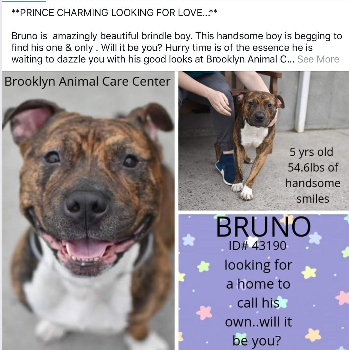 In Foster Bruno Needs Help Nyc Dogs Adoption Dogs