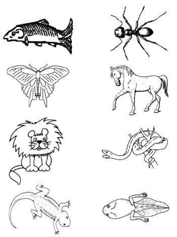 Animal Clipart | Animal habitats, Animal clipart, Animals