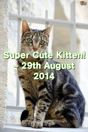 Michelle Ogden Tells About Super Cute Kitten! – 29th August 2014   #catbreeders  #cats  #catoftheday  #adoptdontshop  #Adult  #Choose  #catcondo  #Complete