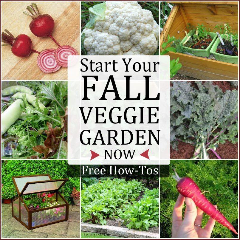 Fall Vegetable Gardening 101