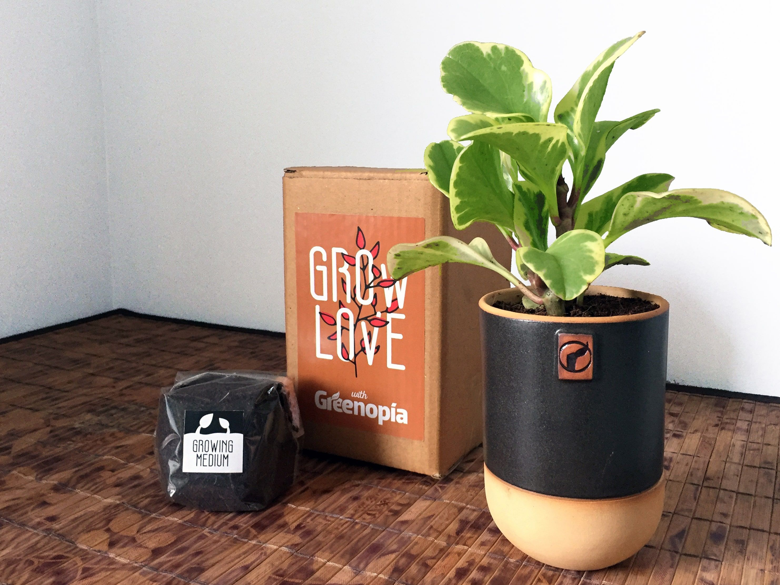 Growlove Self Watering Kit Aircleaningplant1 Graphite Pots Planters Garden Home Décor