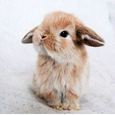 49 bunnies   Bunnies   Beauty   Photoshoot   All t
