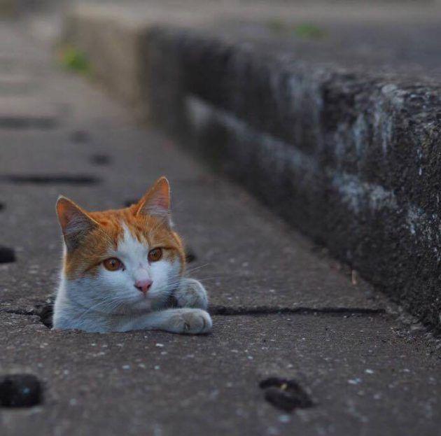 日本のカメラマンが撮影した「野...
