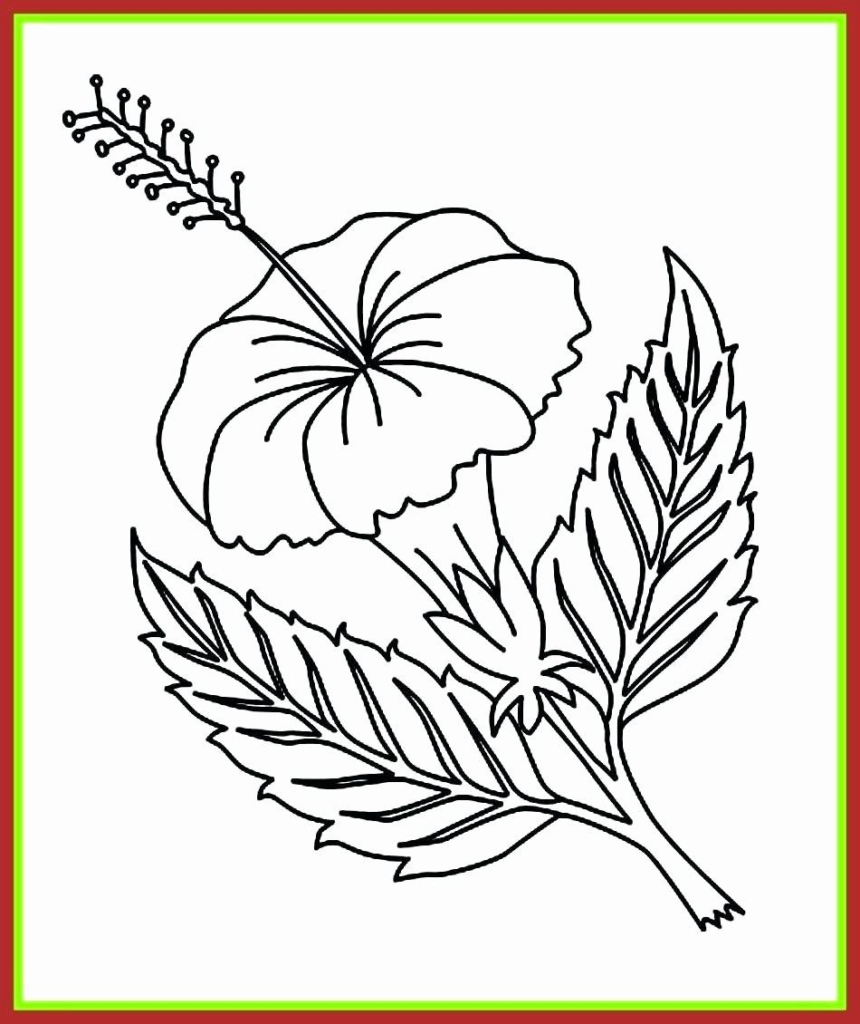 Flower Clip Art Coloring Pages Luxury Hawaii State Seal Coloring