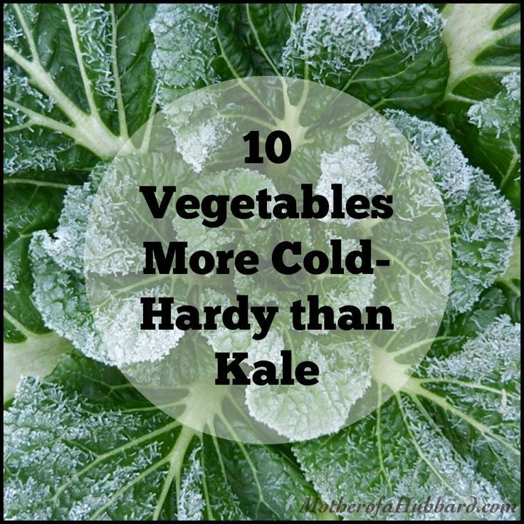 10 Vegetables More Cold Hardy Than Kale Frost Protection 400 x 300