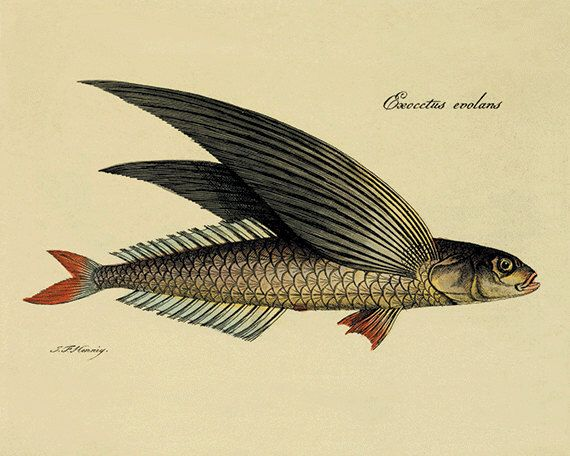 Fish Wall Art flying fish art print vintage sea art print fish wall art beach