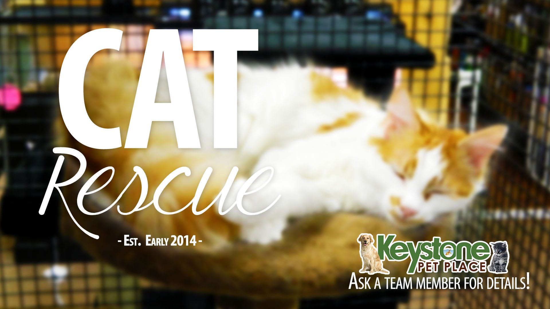 Cat Rescue.  Spayed or neutered and up-to-date on all their shots.  For $90 adopt them and give them a forever home :)
