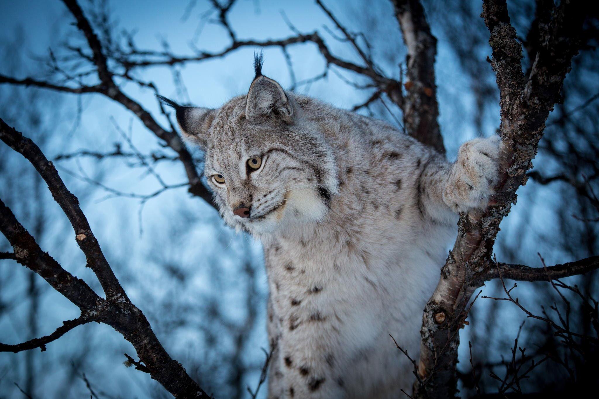 Картинки животных кошек диких, надписью