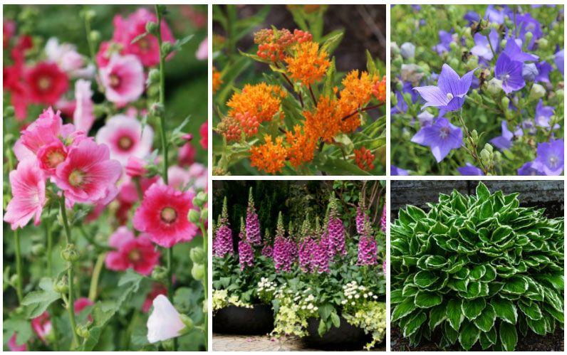 10 Fantastic Zone 3 Perennials in 2020 | Perennials ...