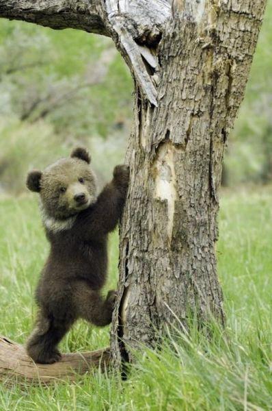 【画像】可愛くもあり、面白くもある動物たちの写真30枚