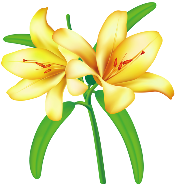 free clip art lily flowers - photo #18
