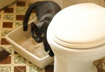 Photo of ¡Nunca más tendrás que limpiar tu caja de arena para gatos con este simple truco!